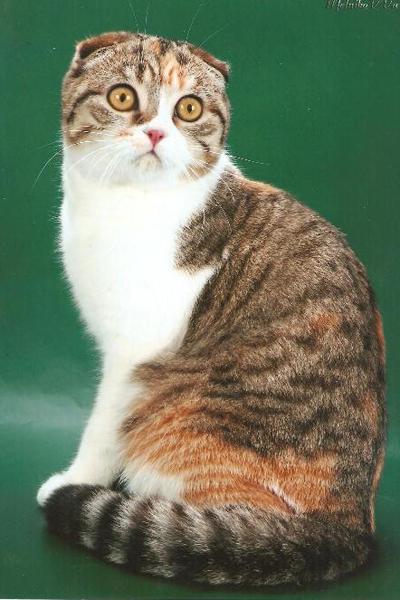 Кошка которая в украине на выставках